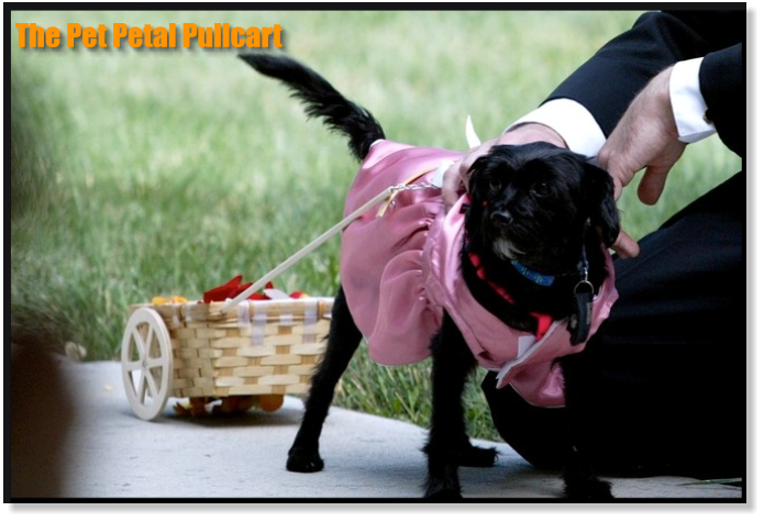 The Pet Petal Pullcart